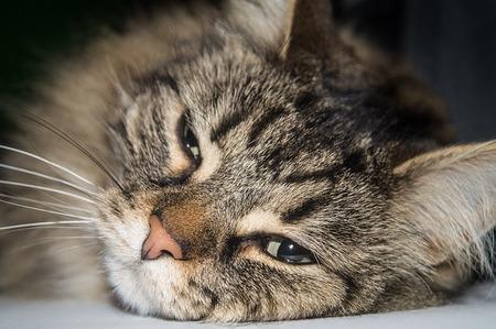 cat-2309127_640.jpg