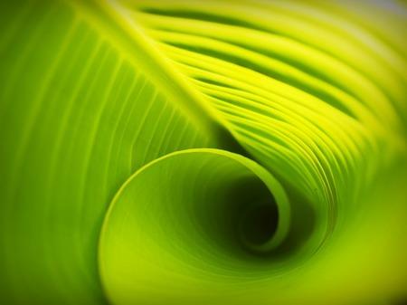 leaf-1551202_640.jpg