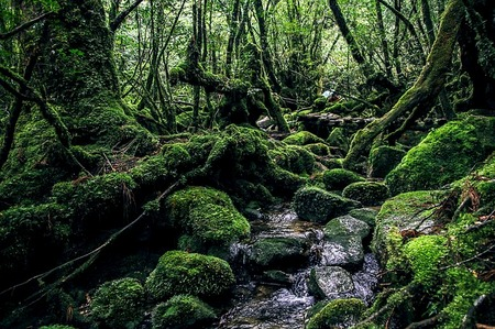 yakushima-island-2336735_640.jpg