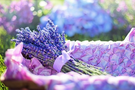 lavender-2482372_640.jpg